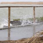A partfalat csapkodják a hullámok az erős északi szélben a balatonfenyvesi strandon 2014. március 5-én. A Balaton vízszintje elérte a 129 centimétert, ez 19 centiméterrel magasabb a szabályozási maximumnál. A Sió-zsilip nyitását február 28-án, 127 centiméteres vízállásnál megkezdték, azonban a vízgyűjtő területről jelenleg intenzívebben folyik be víz a tóba, mint amekkora a vízeresztés kapacitása, ezért a következő napokban még a vízszint emelkedésére kell számítani. Szakemberek szerint a várhatóan tovább erősödő északi szél kinyomhatja a Balaton vizét a mélyebben fekvő településrészekre. MTI Fotó: Varga György