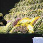Pak Gun Hje dél-koreai elnök fejet hajt az elsüllyedt Szevol dél-koreai komphajó áldozatainak virágokkal díszített oltára előtt a dél-koreai Anszan város Olimpiai Emlékmúzeumában 2014. április 29-én. A balesetben több mint 300-an, főként diákok és tanárok haltak meg vagy tűntek el. Az azonosított áldozatok hivatalos száma vasárnap 193-ra módosult a korábbi 187-ről. A túlélők mindössze 174-en vannak. (MTI/EPA/Yonhap)