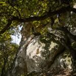 A Nyerges-kő Eger közelében 2014. november 5-én. A védetté nyilvánított magyarországi kaptárkövek közé sorolt Nyerges-kő riolittufa-oszlopának teteje nyereg alakú, felületén 24 kőfülke található. MTI Fotó: Komka Péter