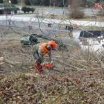 Bokrokat vág ki egy munkás az osztrák-szlovén határnál lévő befogadóállomásnál az ausztriai Spielfeldnél 2015. november 30-án. Megkezdték a spielfeldi határátkelőhöz tervezett kerítés kiépítésének előkészítő munkálatait, a tervek szerint a kerítés még ebben az évben elkészül. MTI Fotó: Varga György