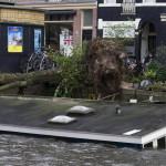 Egy kidőlt fa az amszterdami Jacob van Lennepkade csatornánál 2013. októberében, miután hurrikánerejű szél söpört végig a térségben (MTI/EPA/Evert Elzinga)