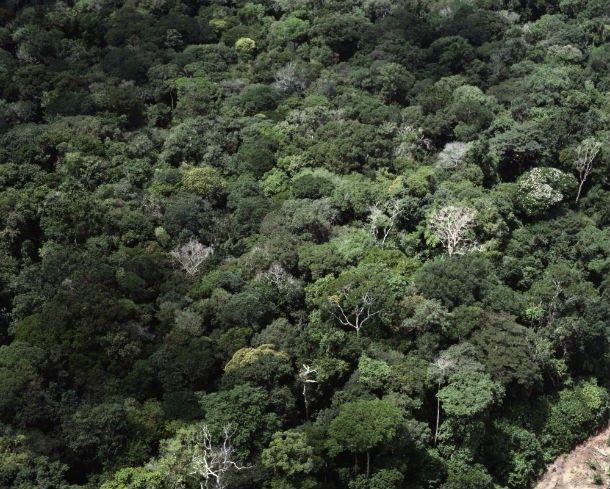 Amazónia. (Fotó: AFP)