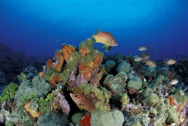 Illusztráció - korall (Fotó: AFP)
