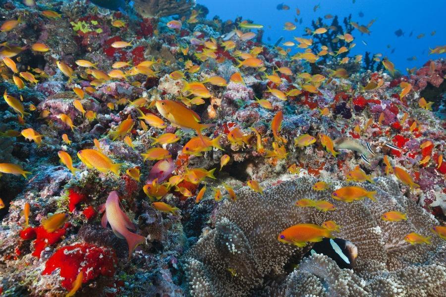 Korallzátony-ökoszisztéma. (Fotó: AFP)