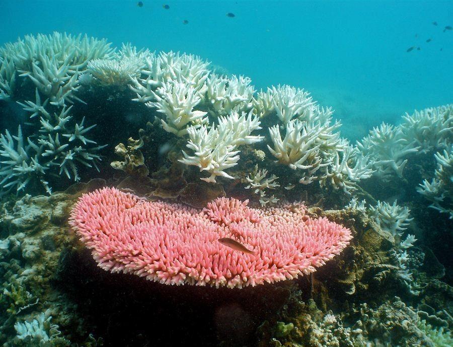 Nagy-korallzátony. (Fotó: EPA/AIMS/Ray Berkelmans )