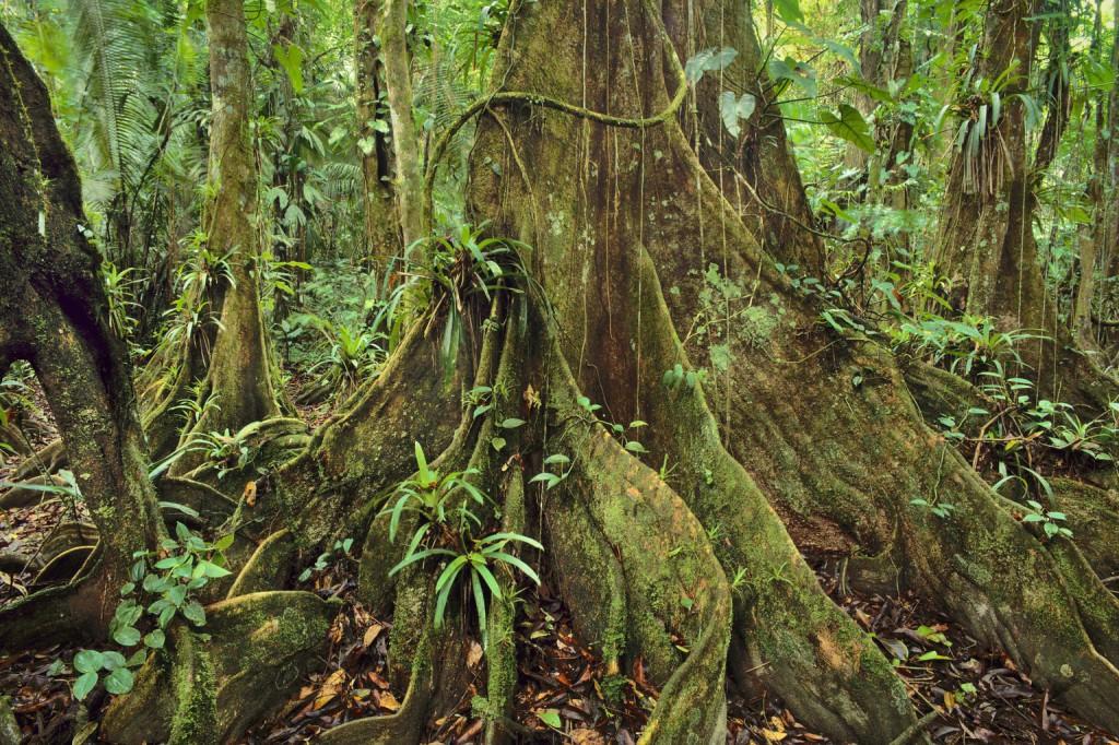 Esőerdő aljnövényzet (Fotó: AFP)