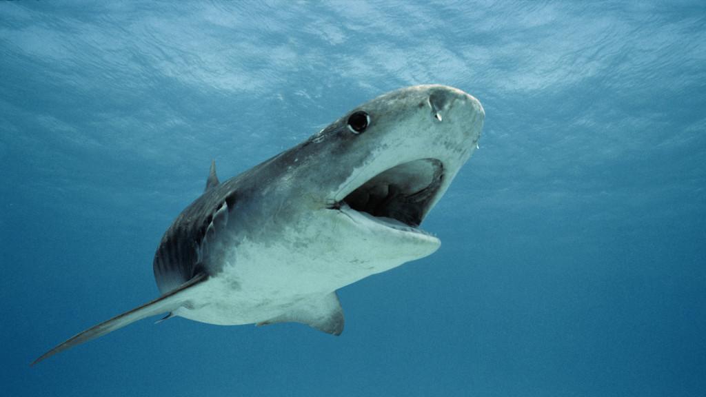 Cápatámadásba halt bele egy férfi Hawaiin
