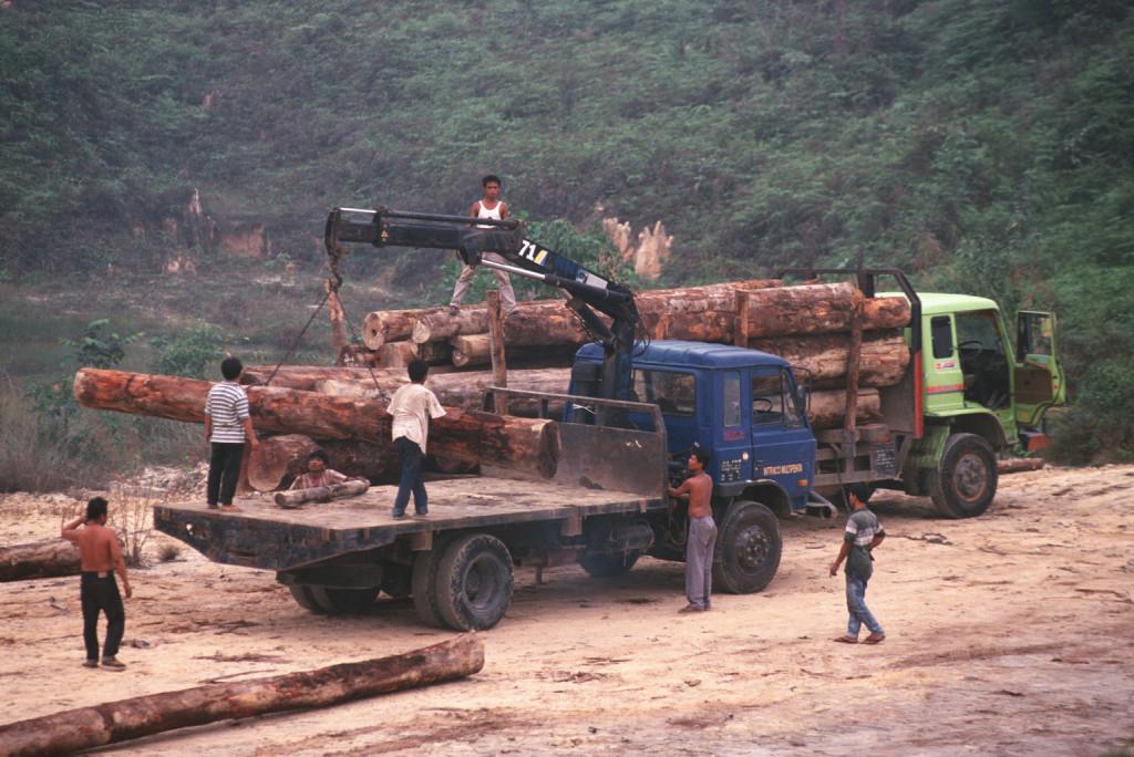 Fakitermelés Szumátrán (Fotó: Getty Images)