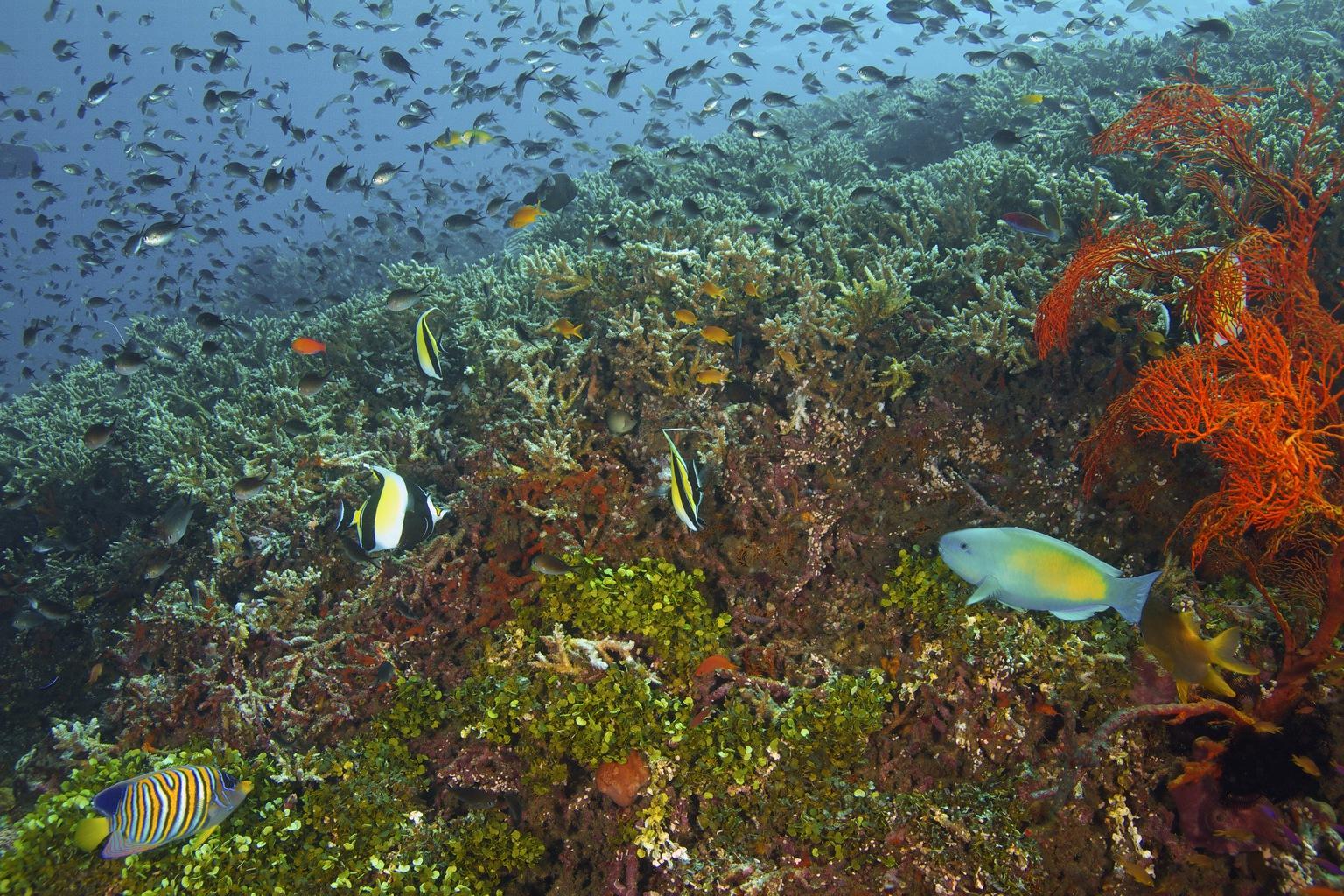 Korallzátony Balinál (Fotó: AFP)