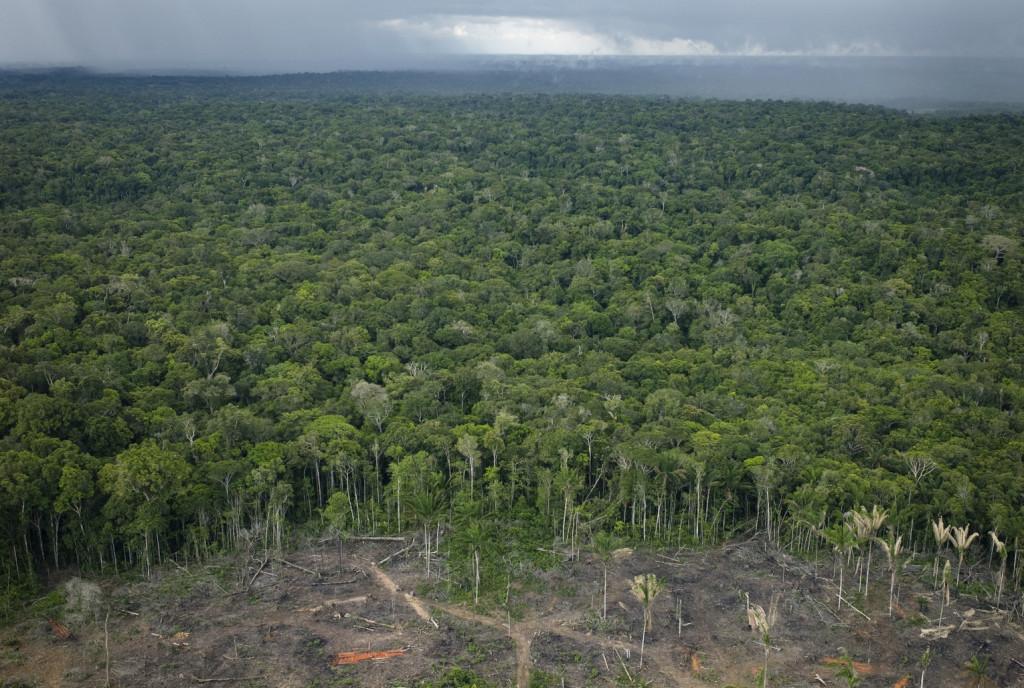 Erdőirtás Amazóniában (Fotó: Getty Images)