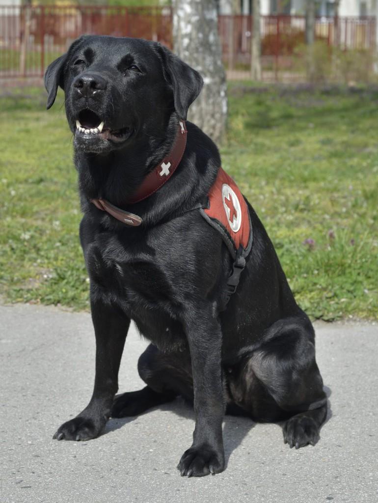 Kutyája lőtte meg a volt amerikaifutball-játékost
