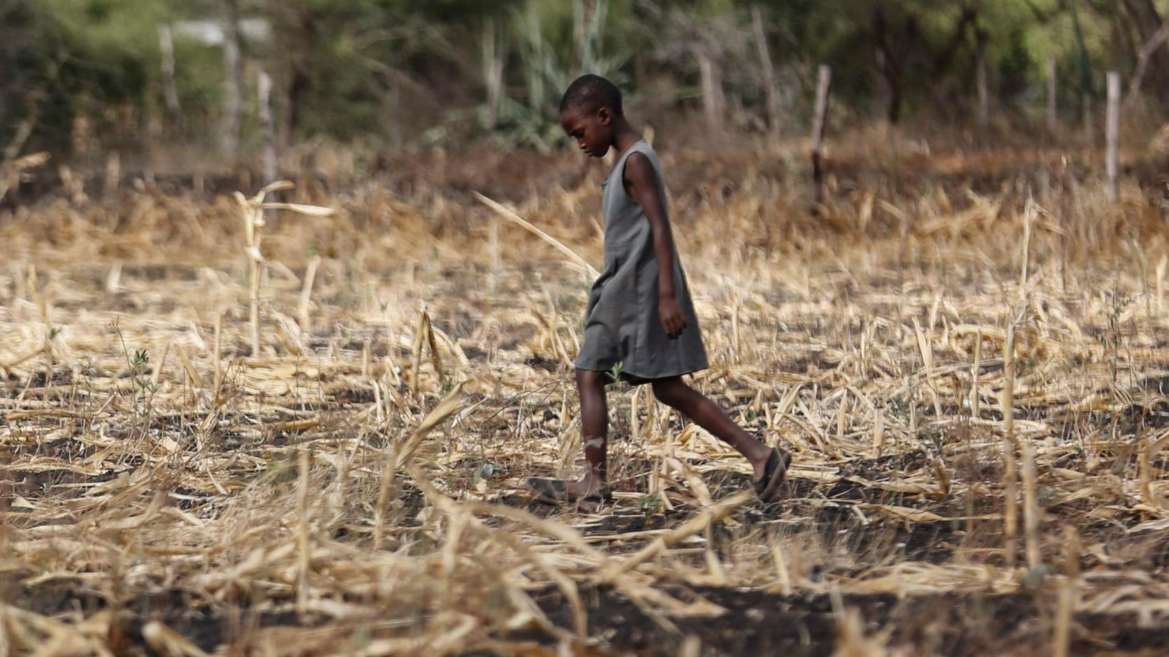 Matinyani, 2015. március 23. Kiszáradt kukoricaföldön egy lány a Kenya délkeleti részén fekvő Matinyani közelében a víz világnapján, 2015. március 22-én. A kenyai kormány szerint az országban 1,6 millió embert fenyeget éhínség az aszályos időjárás miatt.  (MTI/EPA/Kurokava Dai)