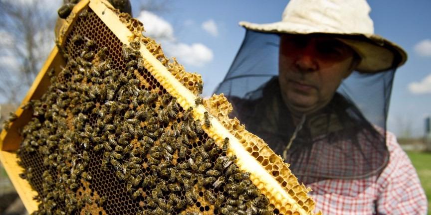 Méhészet egy Orosházához közeli tanyán. MTI Fotó: Rosta Tibor