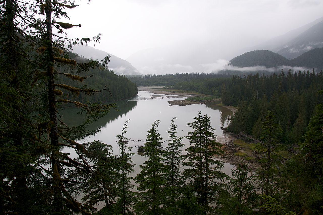 Nagymedve esőerdő  kép: Wikipedia