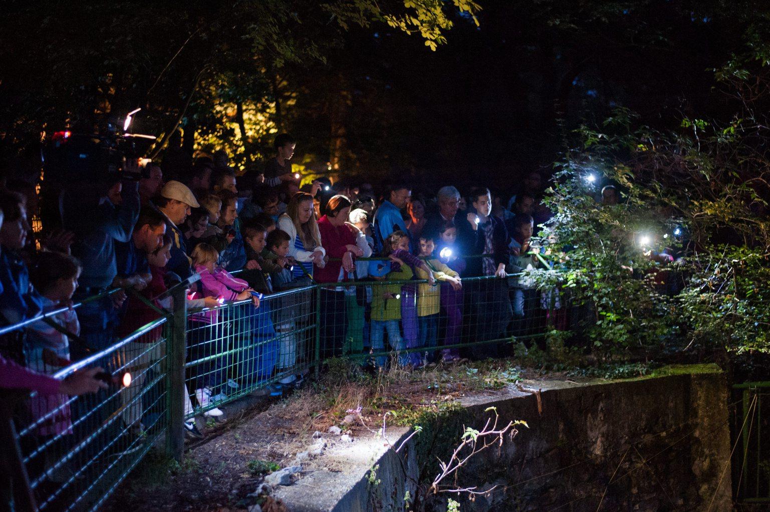 Látogatók a pécsi állatkertben az állatkertek éjszakáján 2013. augusztus 30-án. MTI Fotó: Sóki Tamás