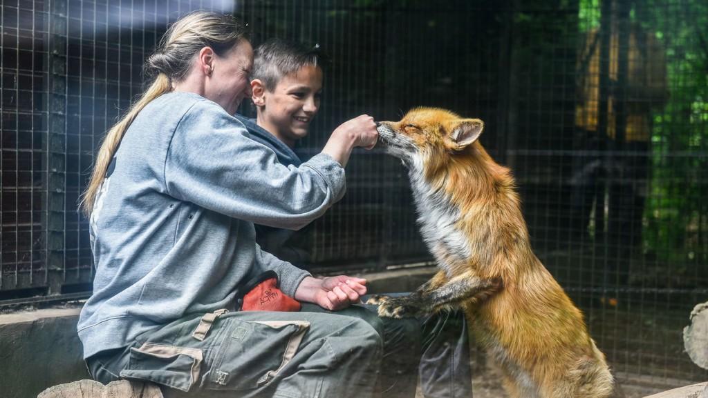 Gyereknapi programokkal készül a negyvenéves Budakeszi Vadaspark