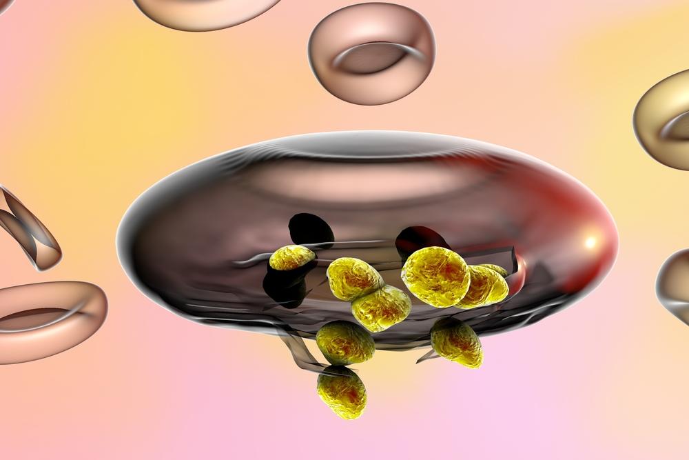 Maláriaparaziták lépnek ki egy vörösvérsejtből. (Fotó: Shutterstock)