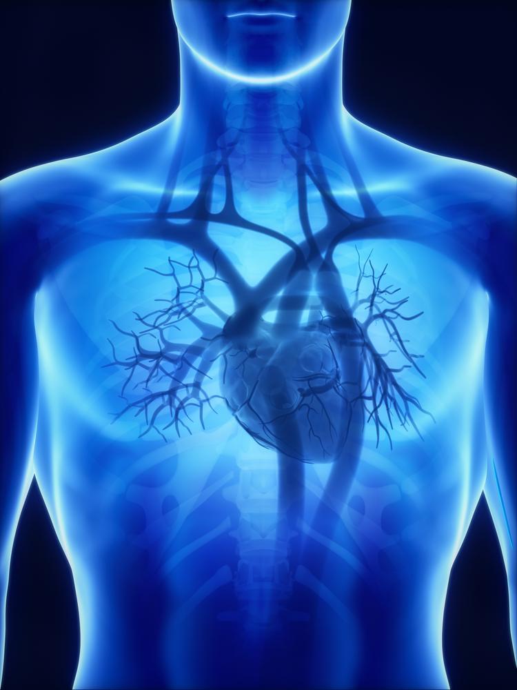 Emberi szív. (Fotó: Shutterstock)