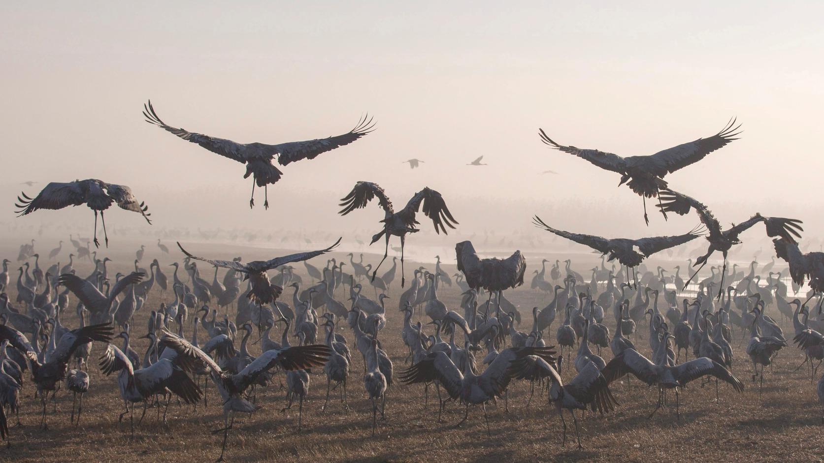 """A véltnél hamarabb kezdődött meg a madarak """"felemelkedése"""""""
