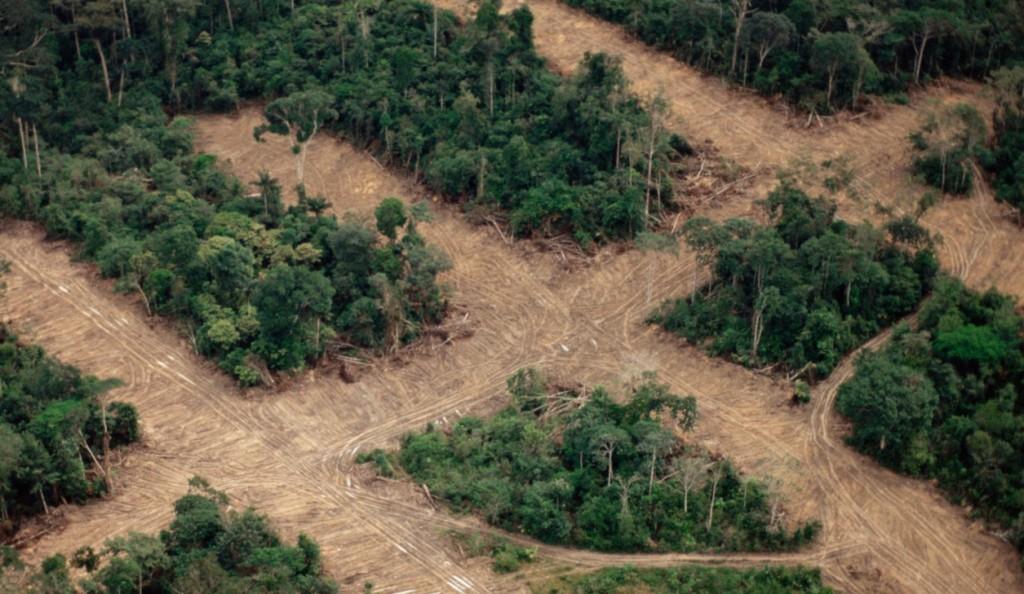 Tudósok százai sürgetik az EU-t, hogy gyakoroljon nyomást Brazíliára az erdőirtás miatt