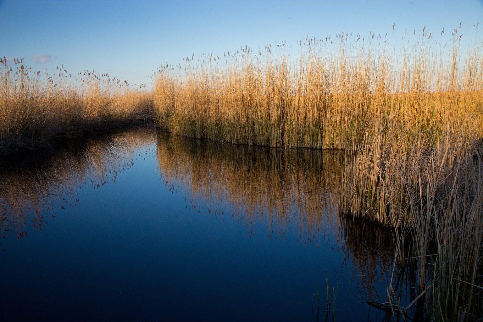 Nádas a Fertő-Hanság Nemzeti Parkban, az UNESCO világörökségi védelem alatt álló Fertő kultúrtáji területen. Az ENSZ Nevelésügyi, Tudományos és Kulturális Szervezete (UNESCO) Világörökség Bizottsága 2001-ben vette fel a Világörökség Listára a Fertő / Neusiedlersee kultúrtájat, amely Ausztriával közös terület. (MTI Fotó: Nyikos Péter)