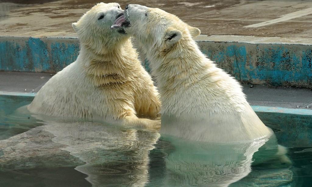 Az európai élmezőnybe tartozik a fővárosi állatkert