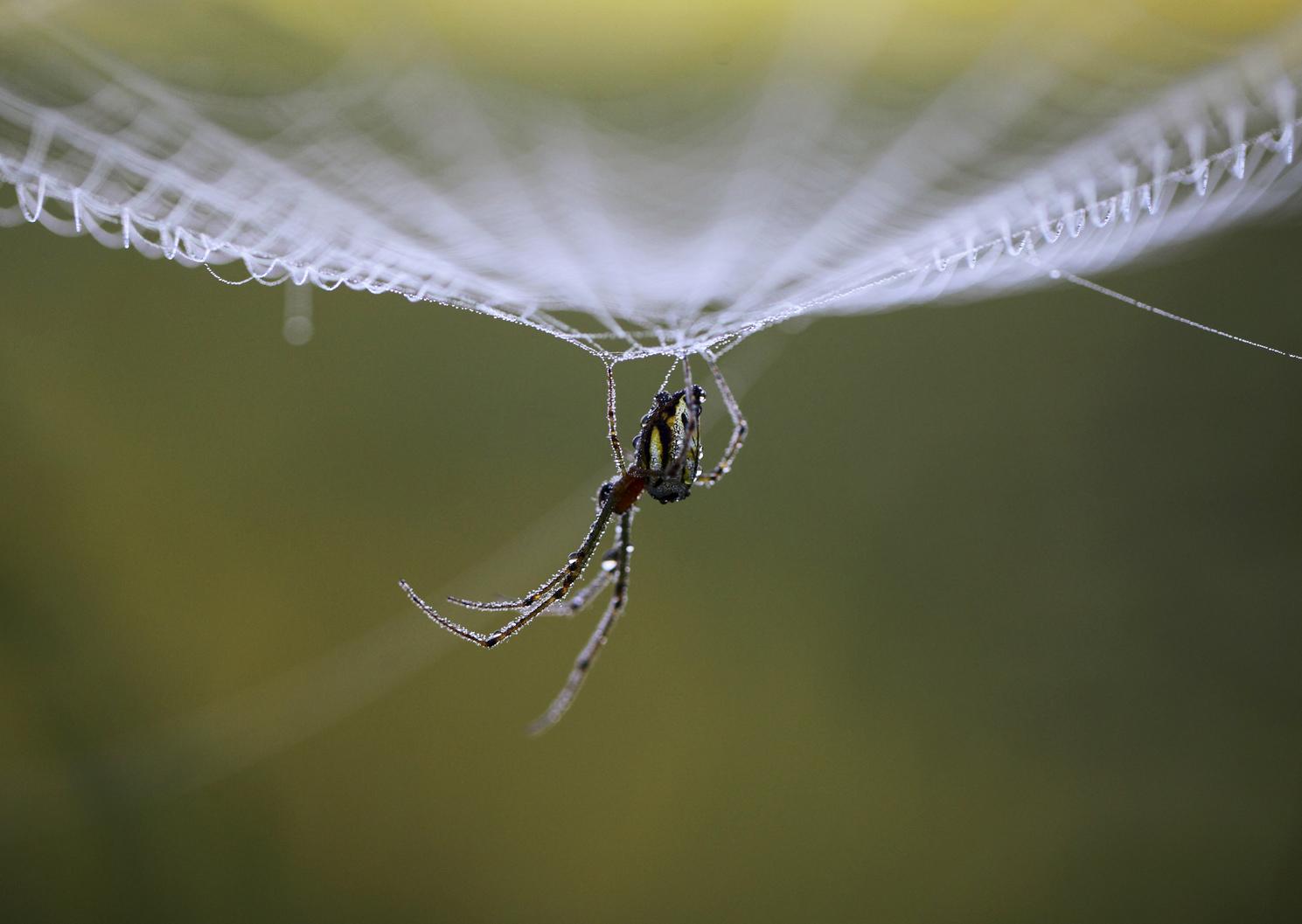 Harmatcseppek egy hálójában pihenő pókon Nepálban. (Fotó: Reuters/Navesh Chitrakar)