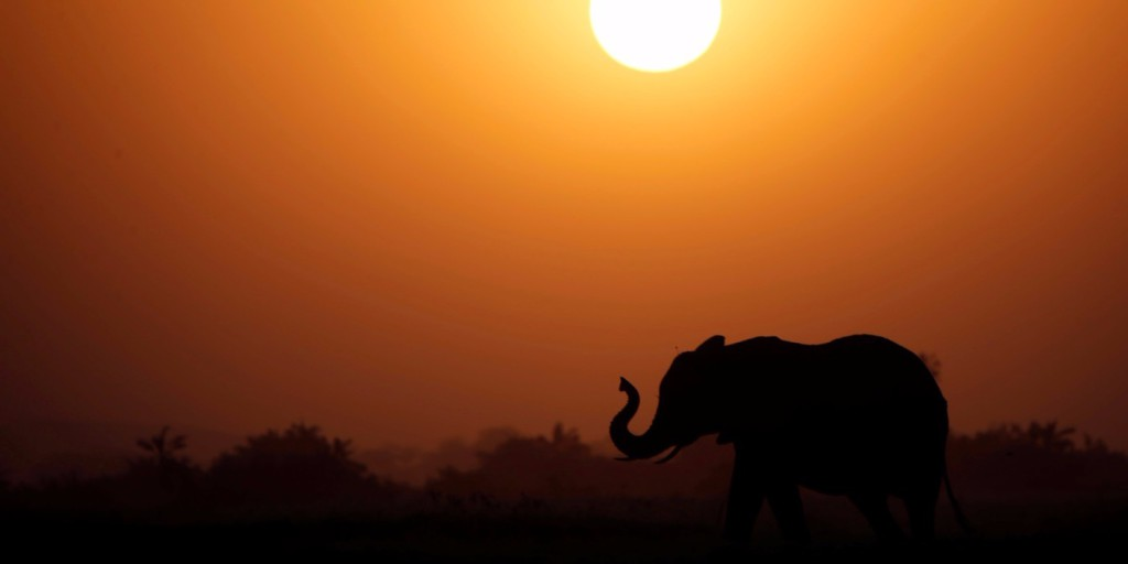 Betilthatják vadon élő afrikai elefántok eladását állatkerteknek és cirkuszoknak