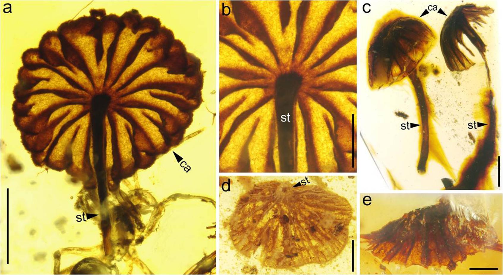 A Nancsingi Geológiai és Paleontológiai Intézet közreadta fotón a felfedezett gombakövületek. (Fotó: AFP)