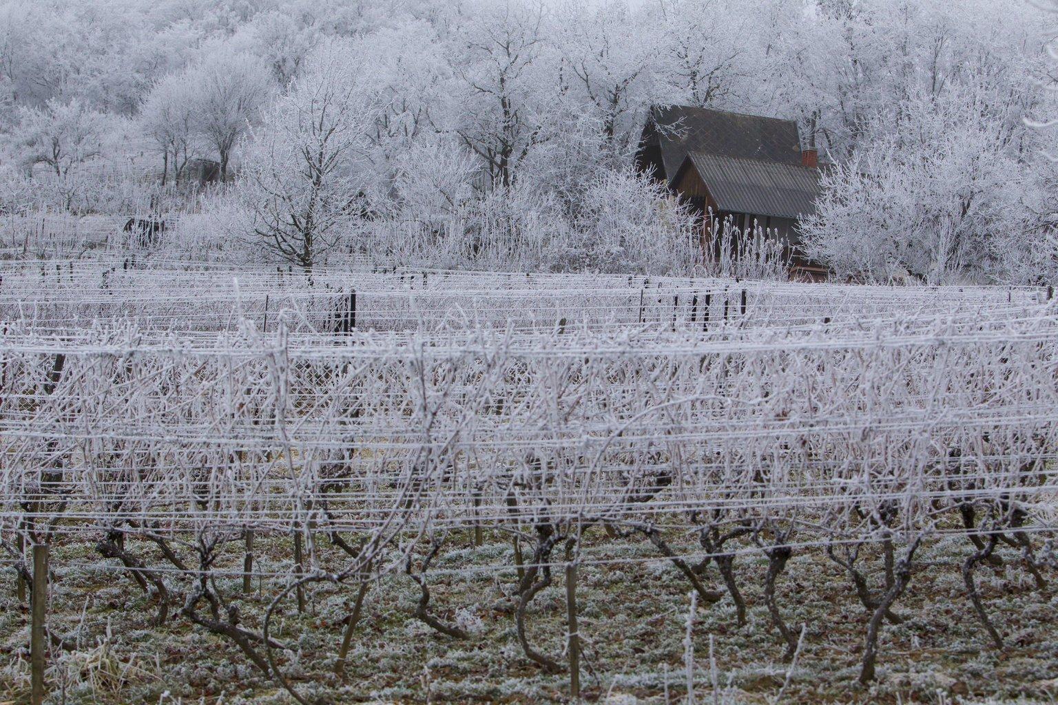 Deres szőlőültetvény és fák a Zala megyei Kiscsehi közelében (MTI Fotó: Varga György)