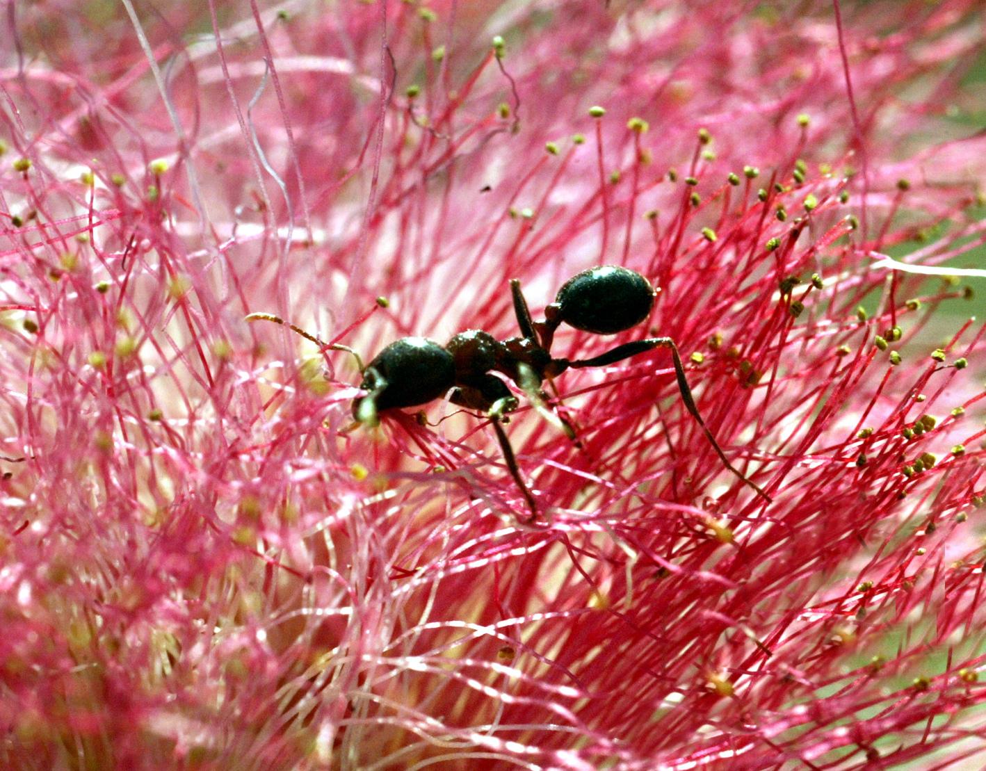 A Formicidae család képviselője növényen. (Fotó: Reuters)