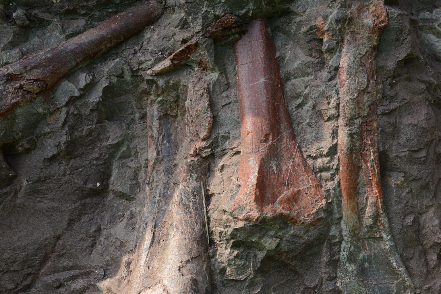 Dinoszauruszkövületek a 150 méter hosszú falban, a kínai Csungcsingben. (Fotó: AFP)