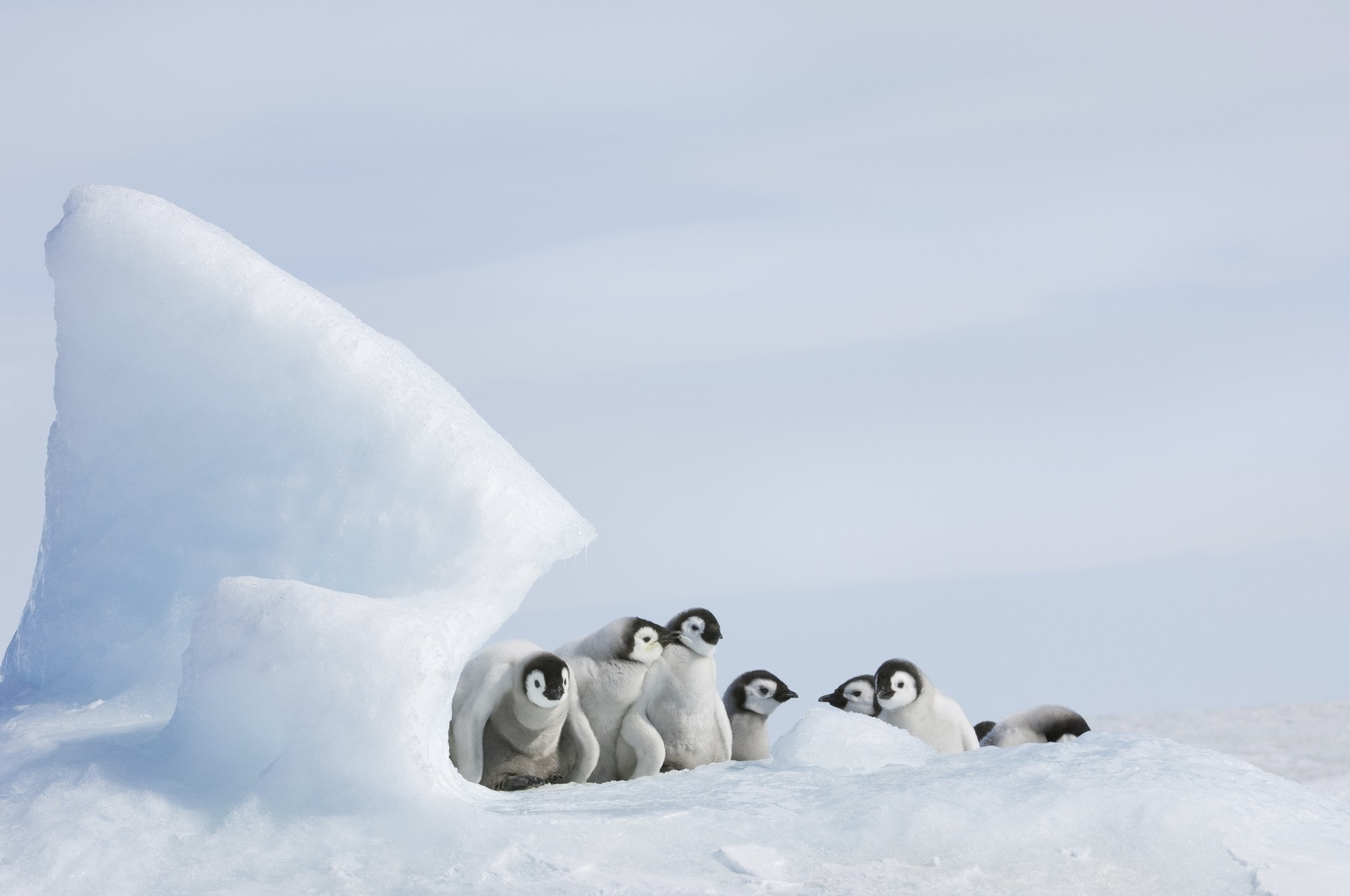 Császárpingvinfiókák óvodája az Antarktiszon. (Fotó: AFP)