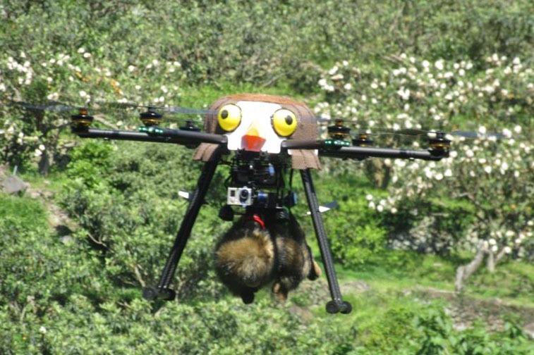 Sólyomnak álcázott drónnal ijesztgetik a termőföldeken lakmározó majmokat Japánban
