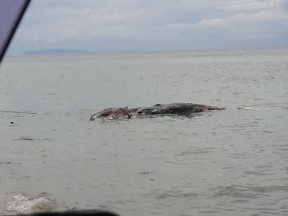 Újabb rémisztő szörnyet hozott felszínre a tenger