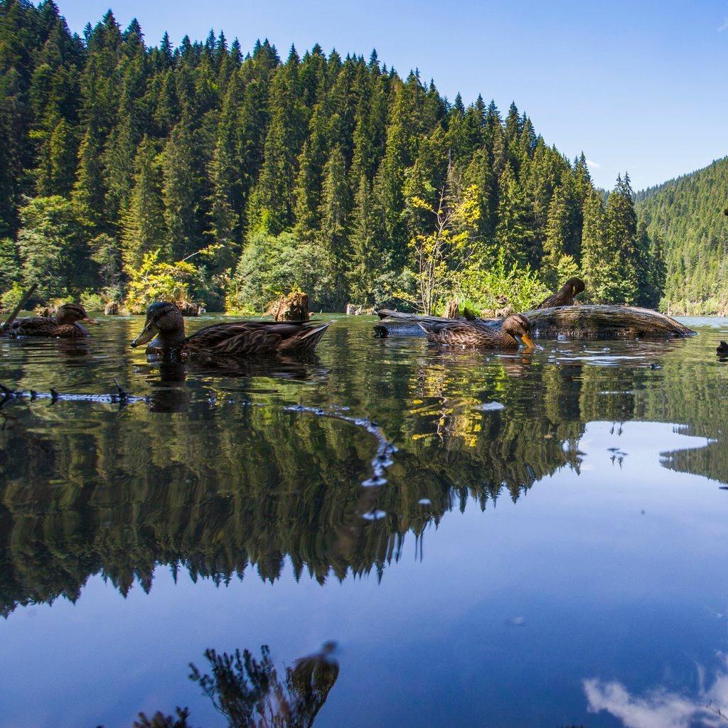 A Gyilkos-tó a Hargita megyei Hagymás-hegységben, Gyergyószentmiklóstól 25 kilométerre 2013. augusztus 5-én.MTI Fotó: Varga György