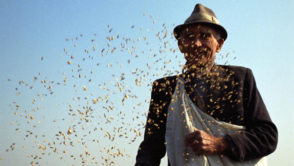 Kézi vetéssel tavaszi árpát és borsót szór földjére Zsákán egy gazda februárban, mert az enyhe tél miatt szabadon maradt búzája nagy részét kiették a rágcsálók és madarak – képünk illusztráció (MTI Fotó: Oláh Tibor)