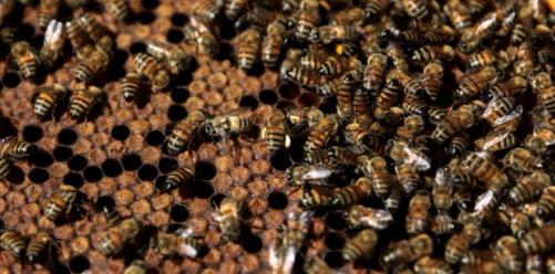 Félmillió méhet ítélt fagyhalálra két vandál fiú