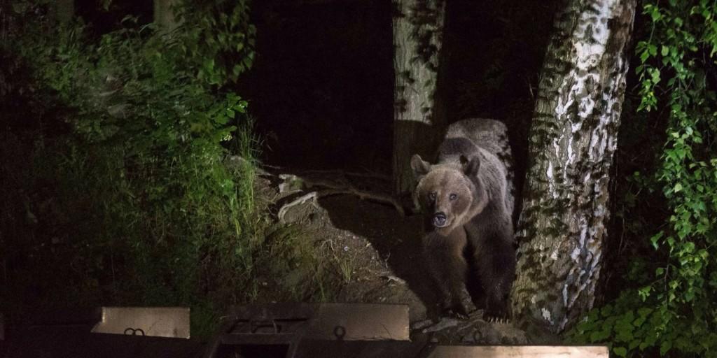 Temetőt dúltak fel barnamedvék Kamcsatkán