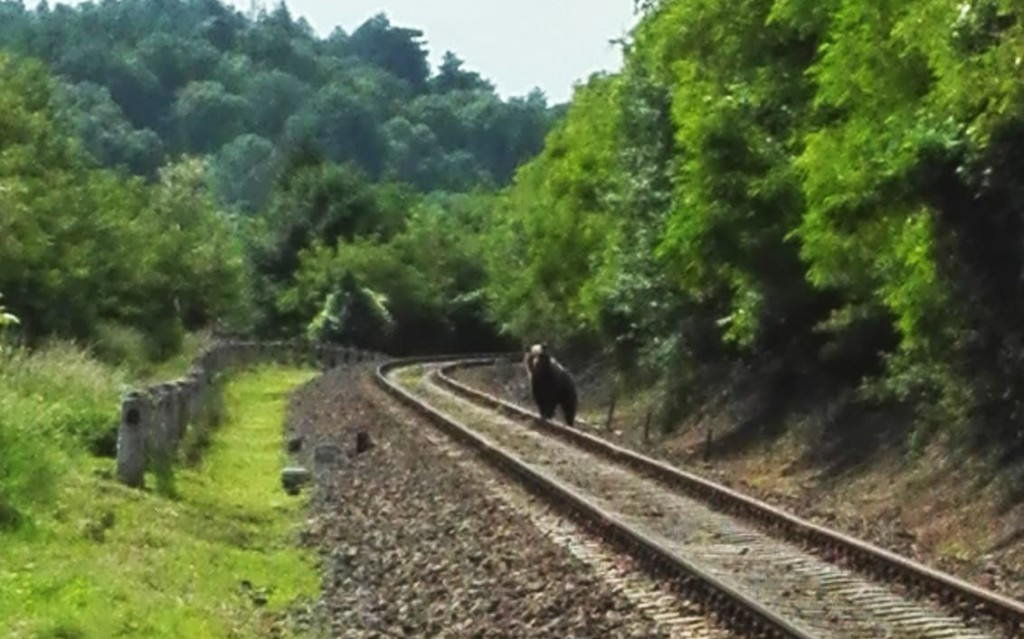 Medvét láttak egy Nógrád megyei vasútvonalnál