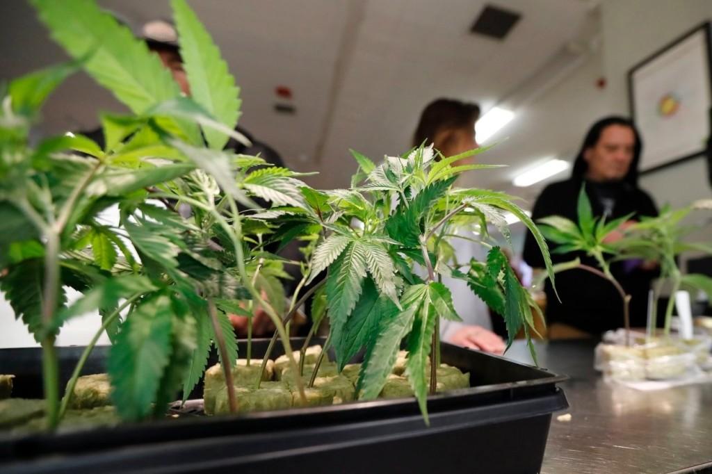 Legalizálják a marihuánát egy európai országban