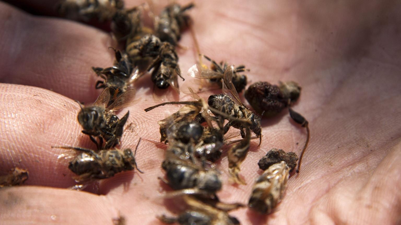 Elpusztult méheket tart a kezében egy méhész (Fotó: MTI/Varga György)