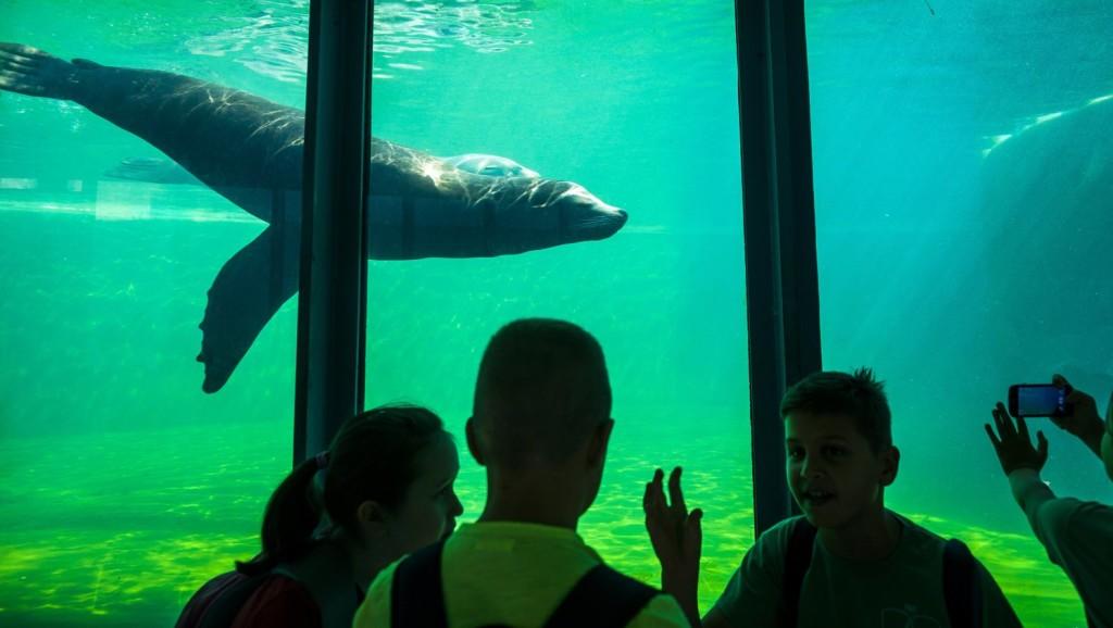 Több ezren voltak az állatkerti Sérült Gyermekek Napján