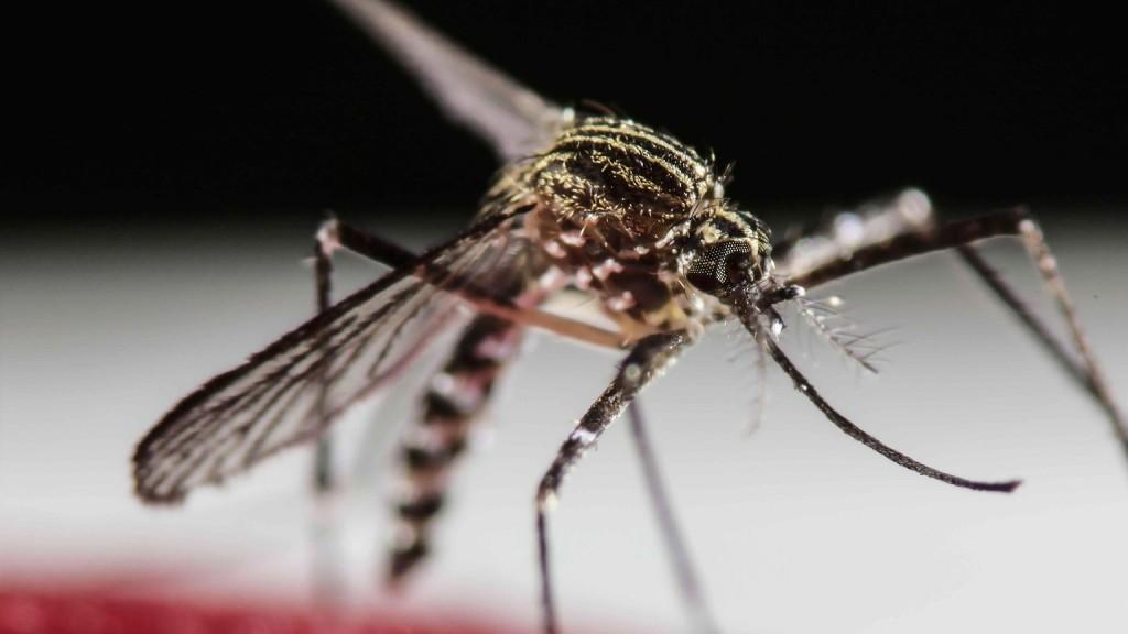 Száznál több embert fertőzött meg a zika Indiában