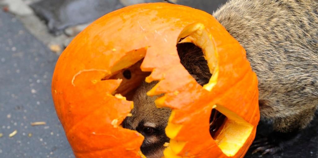 Fergeteges halloween dekor –TikTokon hódít a kertváros látványossága