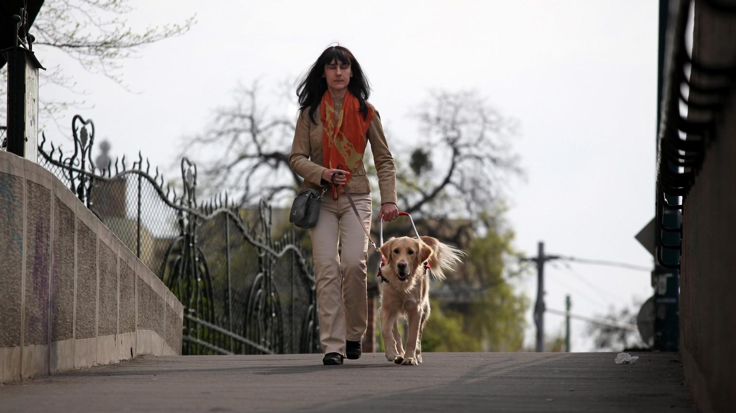 Vakvezető kutya irányítja gazdáját – képünk illusztráció (Fotó: MTI/Mohai Balázs)