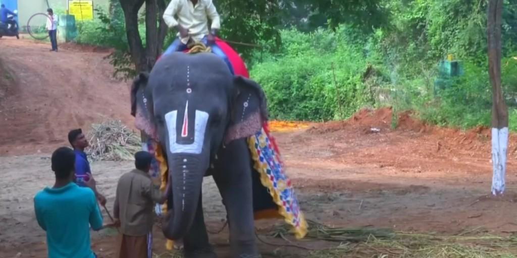 Elefántoknak szerveztek wellnesstábort Indiában – Videó