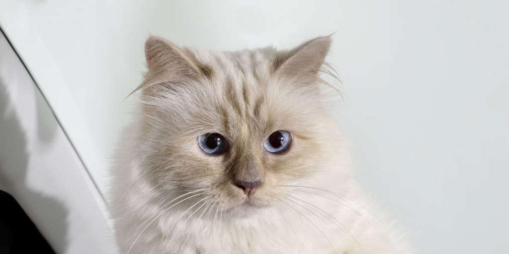 Meghökkentő részletek Lagerfeld végrendeletéből: a cicája is örökös lehet