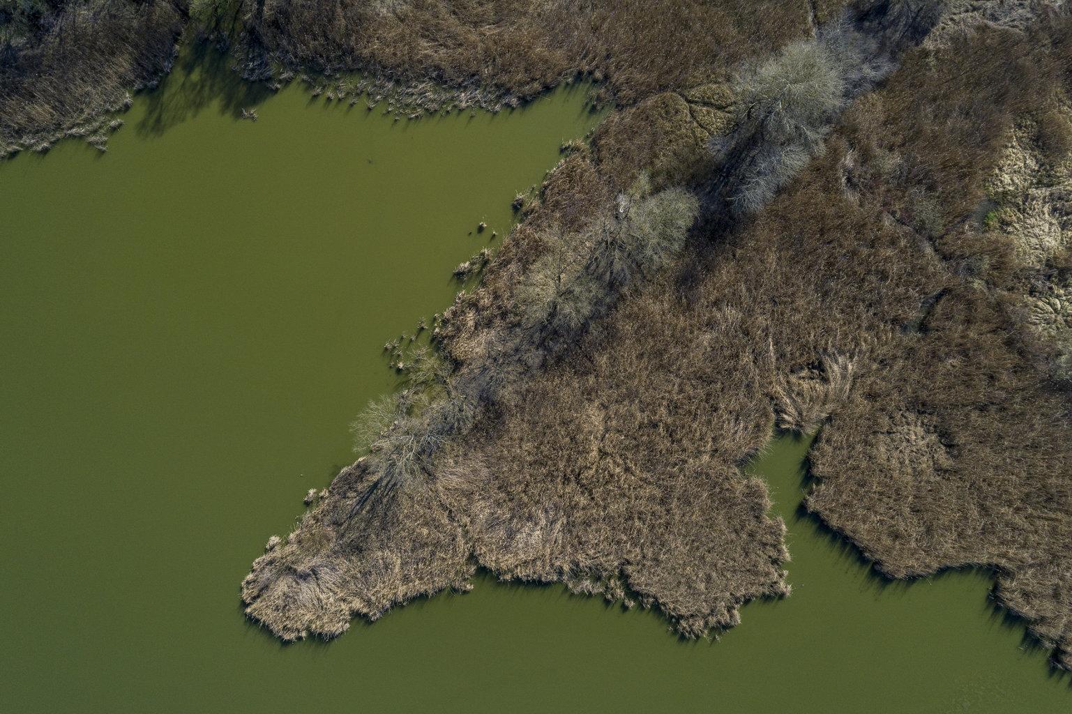 Kakasd, 2019. március 21. Nádas a tóparton Kakasd közelében 2019. március 21-én. Az ENSZ március 22-ét nyilvánította a víz világnapjává, amelynek célja a környezet és ezen belül a Föld vízkészletének védelme. MTI/Sóki Tamás