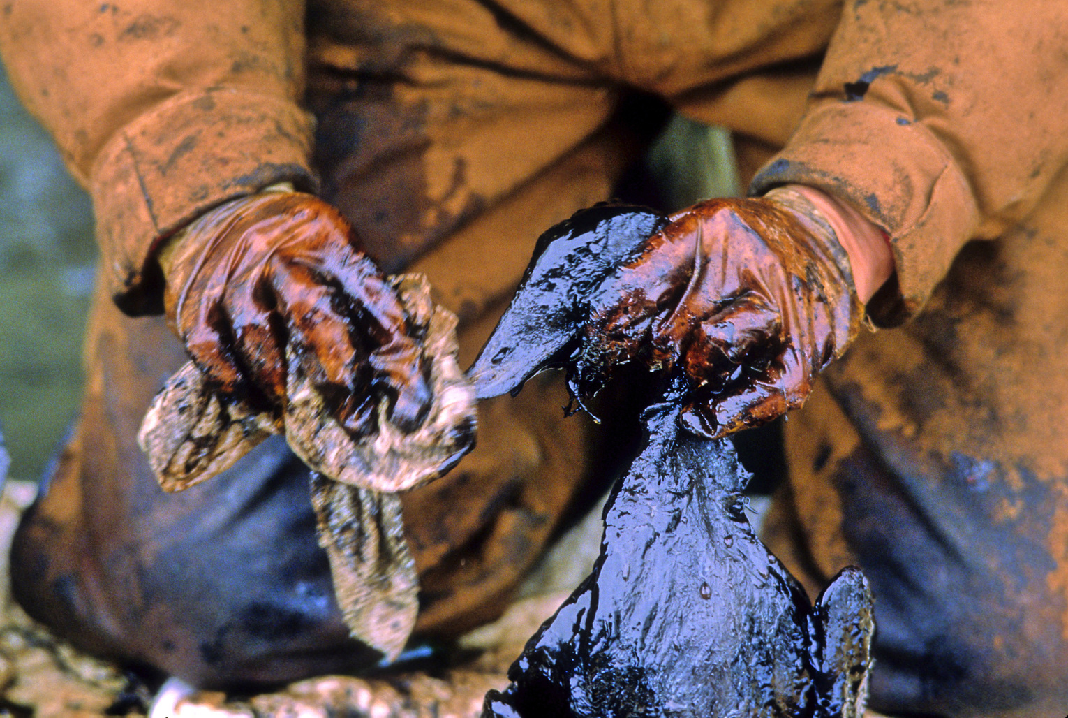 Exxon Valdez oil spill workers recover and clean birds soiled by crude oil spilled when the tanker ran aground in Prince William Sound, April 6, 1989.  (Fotó: Bob Hallinen/Anchorage Daily News/MCT/Getty Images)